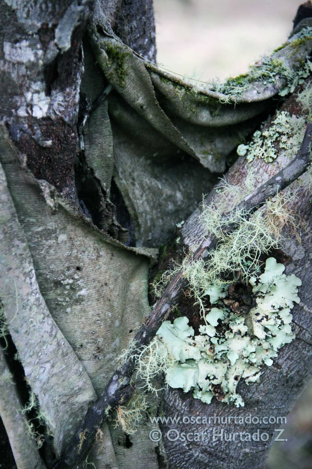 In the realms of nature - Natural and decaying discoveries into the wild