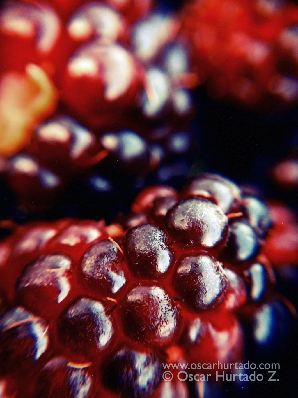 Macro shot of blackberries from the garden