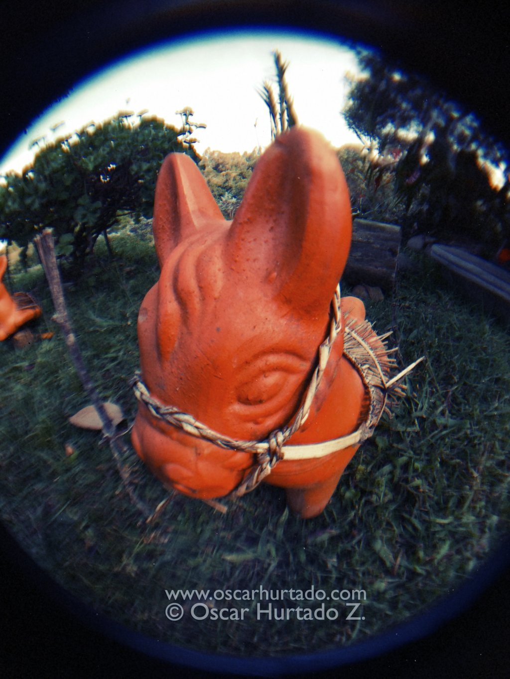 The Pony - Fish-eye color photograph (2014)
