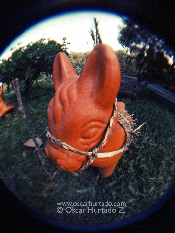 The Pony - Fish-eye color photograph (2014)