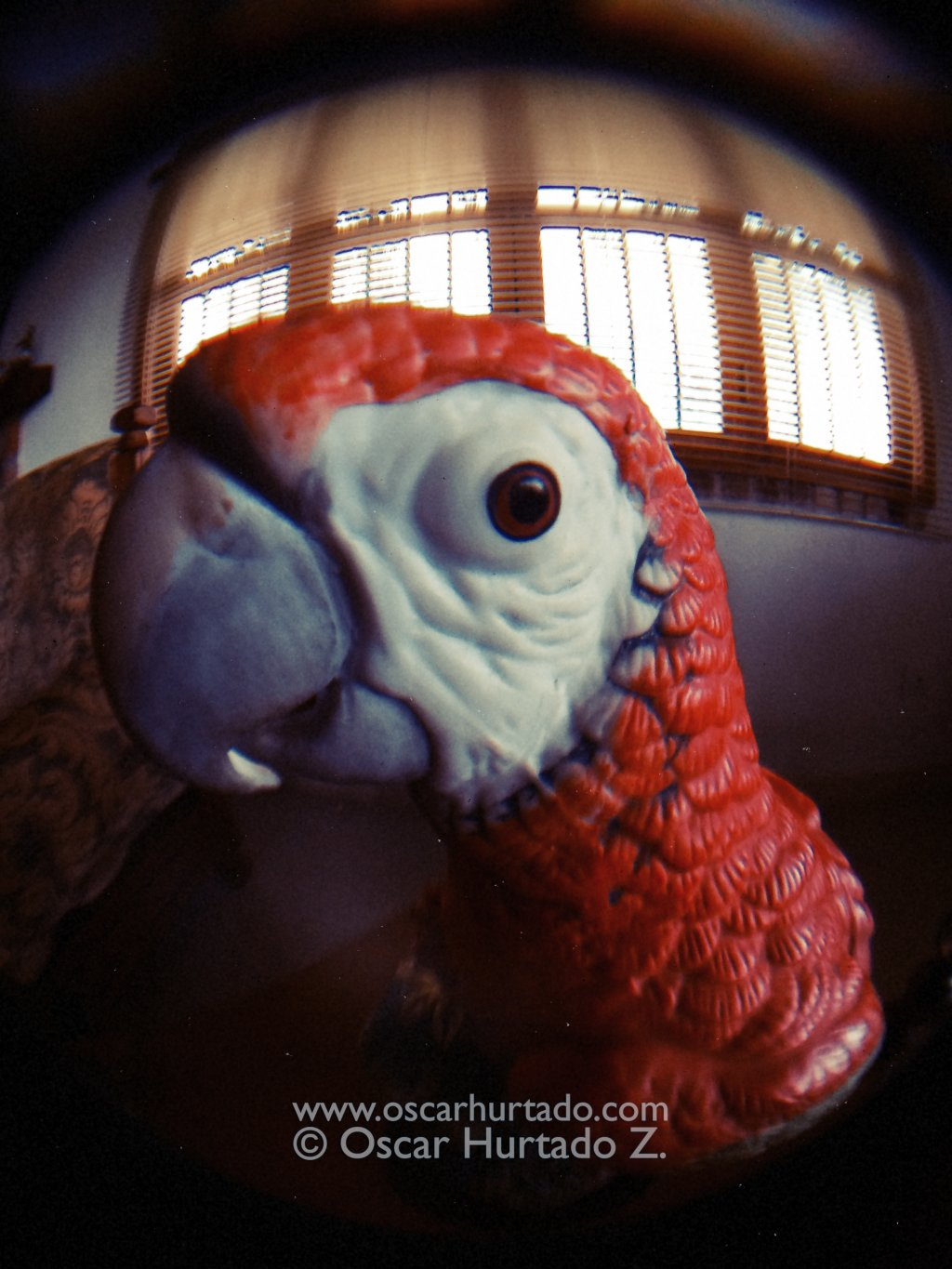 The Red Macaw - Macro color photograph (2014)