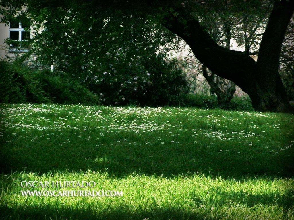 Spring Garden - Color photograph (2008)