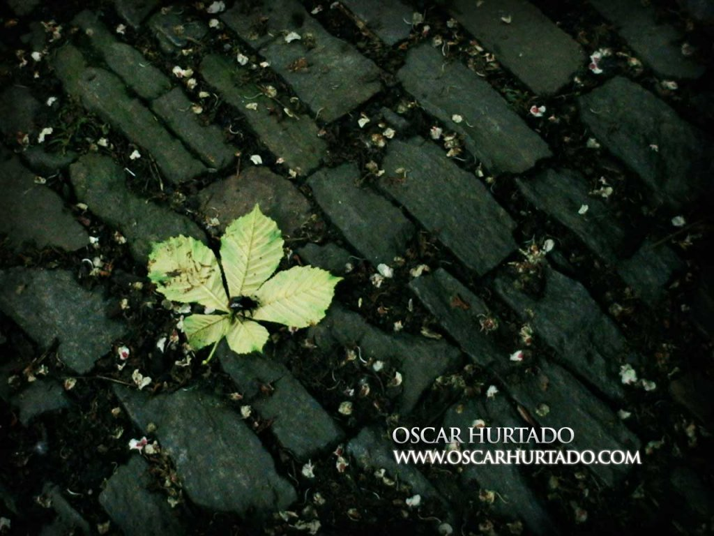 Leaf Away - Color photograph (2008)