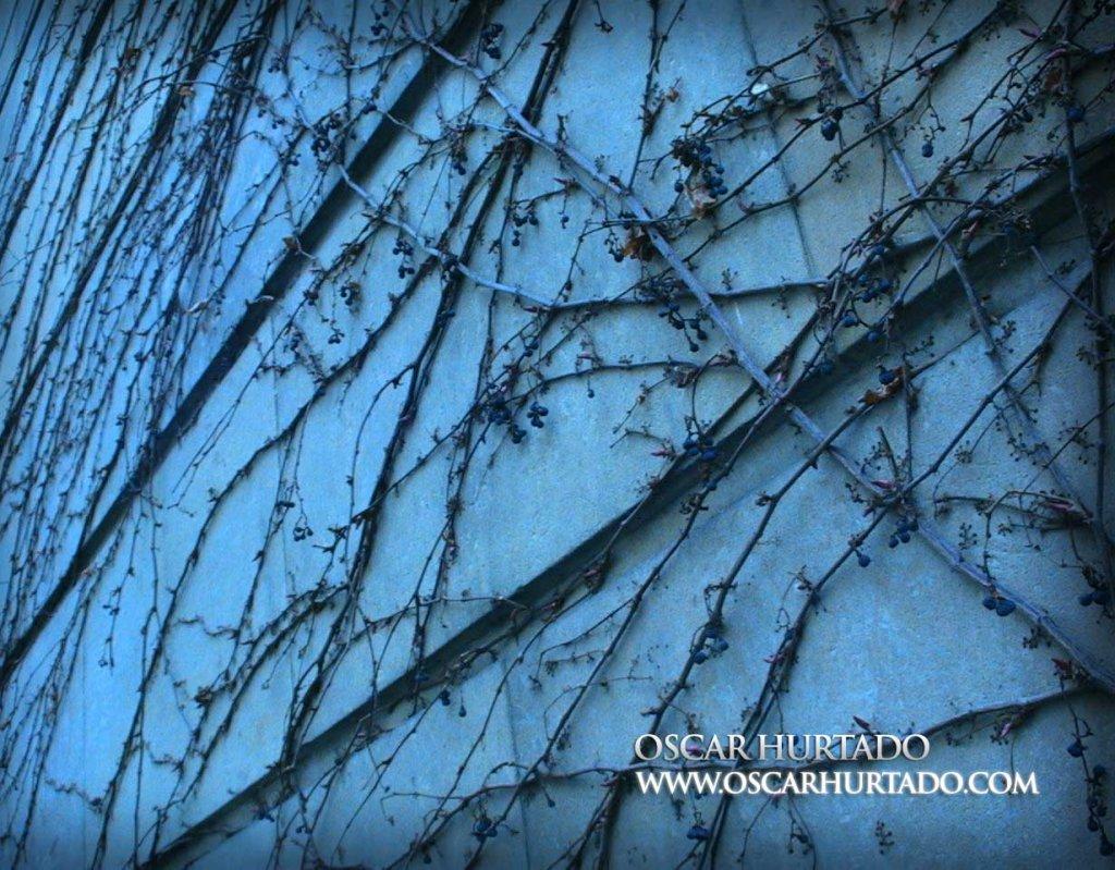 Walls of Vegetation - Color photograph (2008)