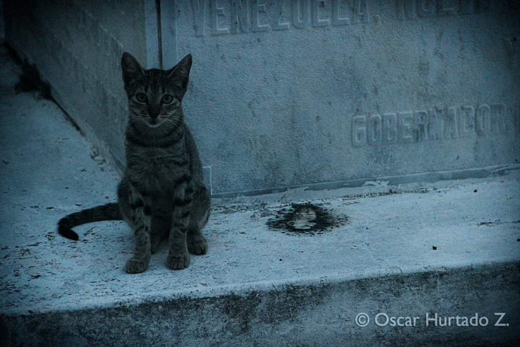 A beautiful street cat resting over one of the graves found in the historical cemetery of Mompox