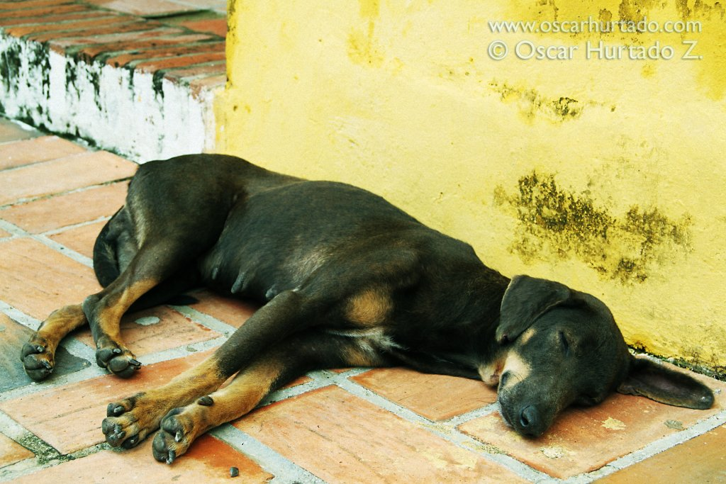 A street dog takes a peaceful nap outside a building in the center of Mompox