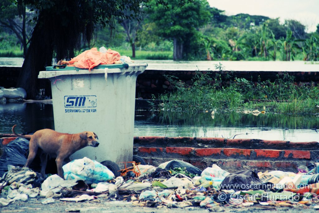 A street dog searches a large amount of trash dumped on the bank of the Magdalena river in Mompox, Colombia