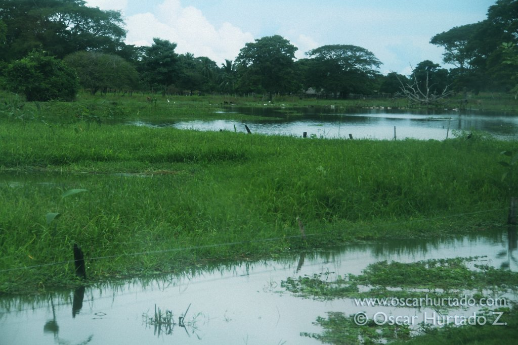 Landscape found on the river shore of the Magdalena river during rainy season